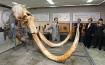 Mammoth task