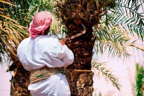 Agriculture in the uae